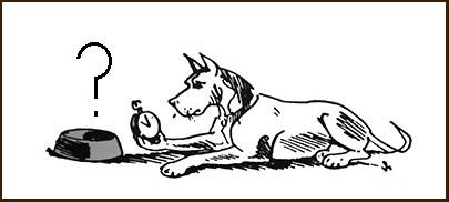 Как правильно кормить собаку после прогулки или до